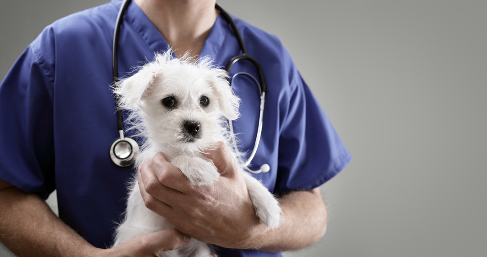 Run Your Veterinary Practice More Efficiently